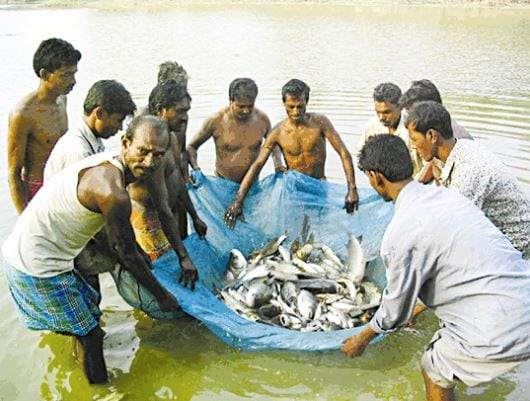 Chinese net becomes nightmare for Tripura fishermen