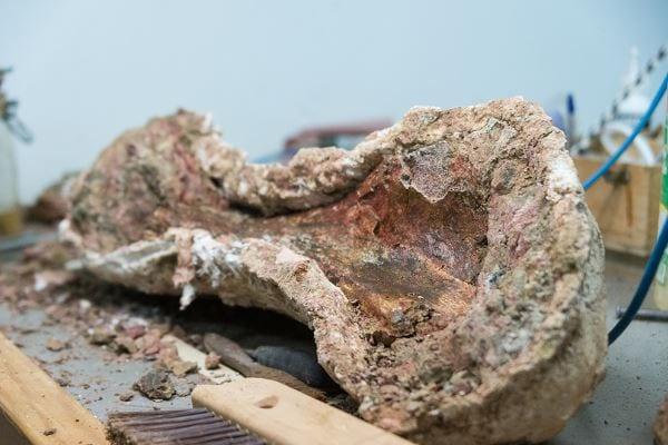 Geological Survey of India-North Eastern Region Celebrates International Fossil Day
