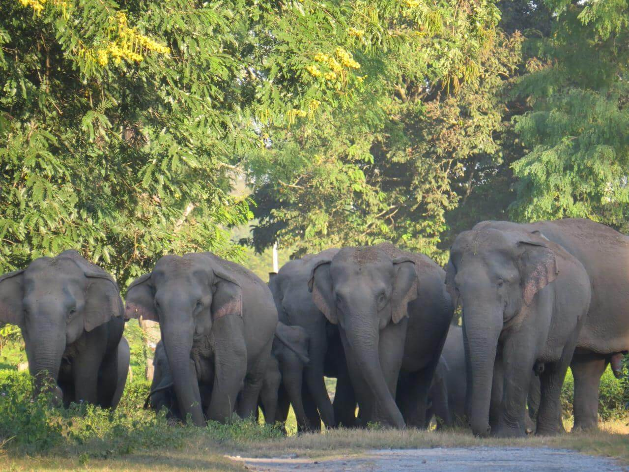 Four people, one elephant killed in a month in Udalguri