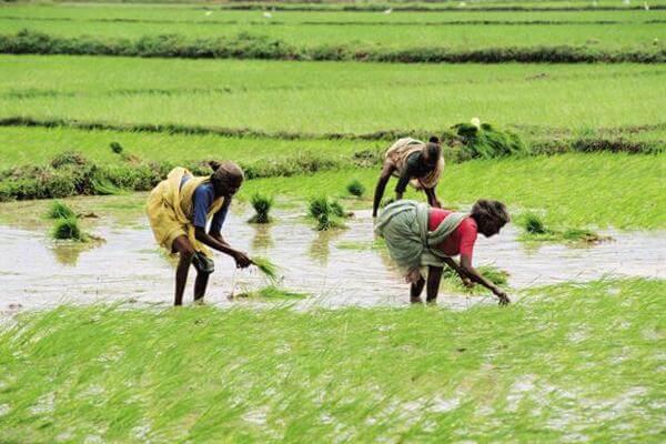 Kerala Prioritises Seed Procurement to Rehabilitate Flood-Hit Farmers