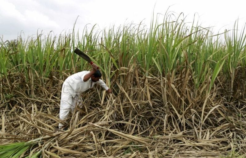 Sugar Mills Worry Over Surplus, Talk of 'Industry Collapse'