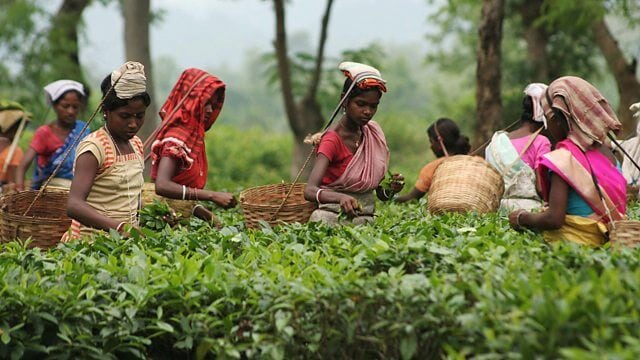 Bengal lobby opposes Tea Board of Indias office shifting to Assam