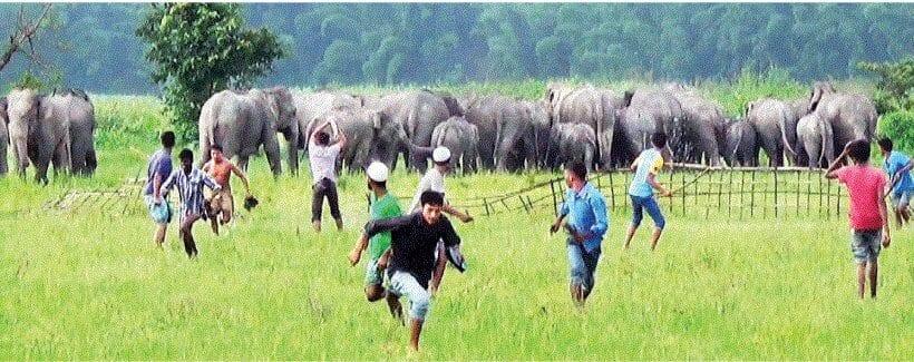 Man-elephant conflict continues unabated in Udalguri