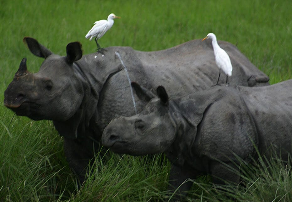 Protection of rhinos and Ex-ministers