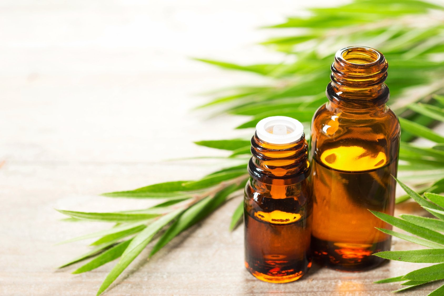 6 Popular Tea Tree Essential Oils For Beautiful Skin And Hair