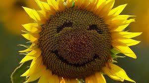 POT-POURRI: Happiness Quotient