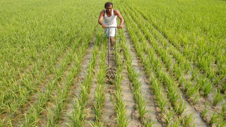 Manipur to Implement Zero Budget Natural Farming in the State