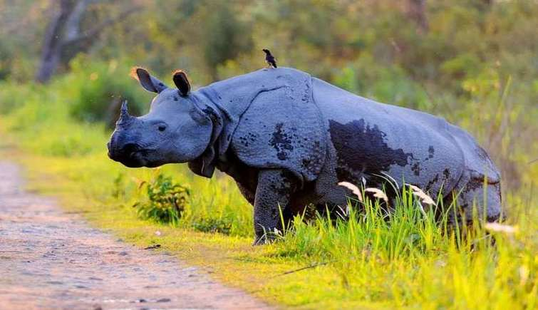 Problem of poaching in Kaziranga