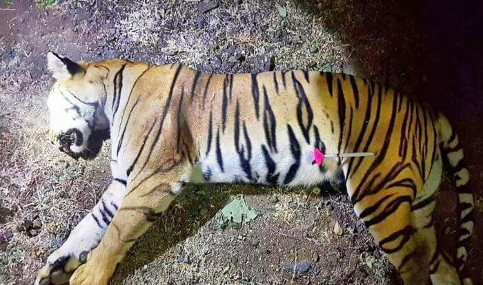 Avni : Shooter ready to face probe into tigress killing