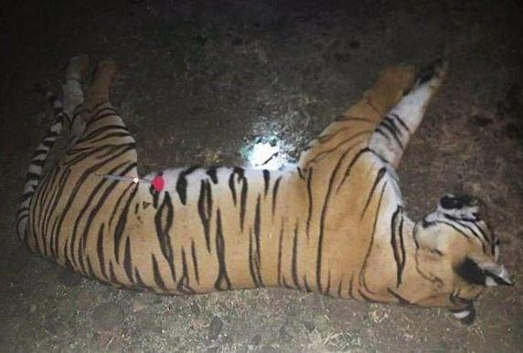 Tigress Avni shot from behind, says expert