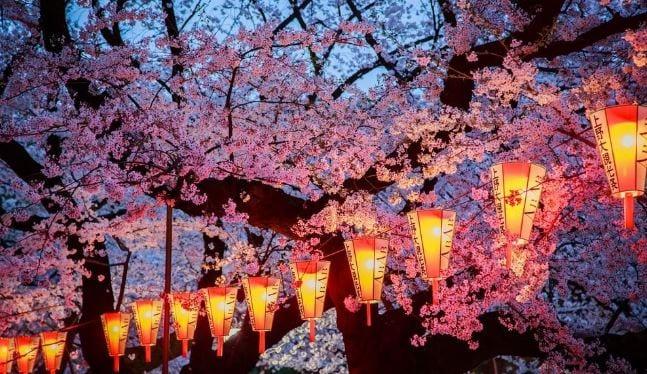 Cherry Blossom Festival ends in Shillong