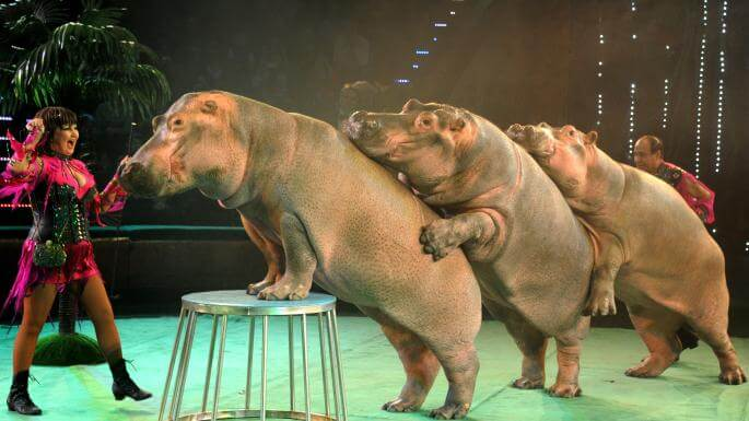 Centre relieves Animals used in Circuses