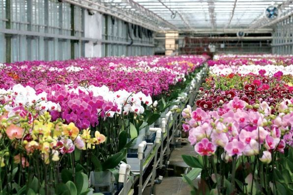 Orchid Production Unit to be Setup in Shillong