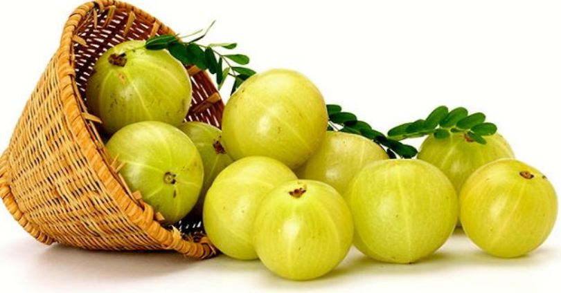 Goodness of Indian Gooseberry (Amla) - Sentinelassam