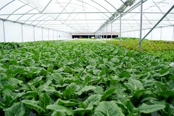 Farmers' body ready for green revolution in Arunachal