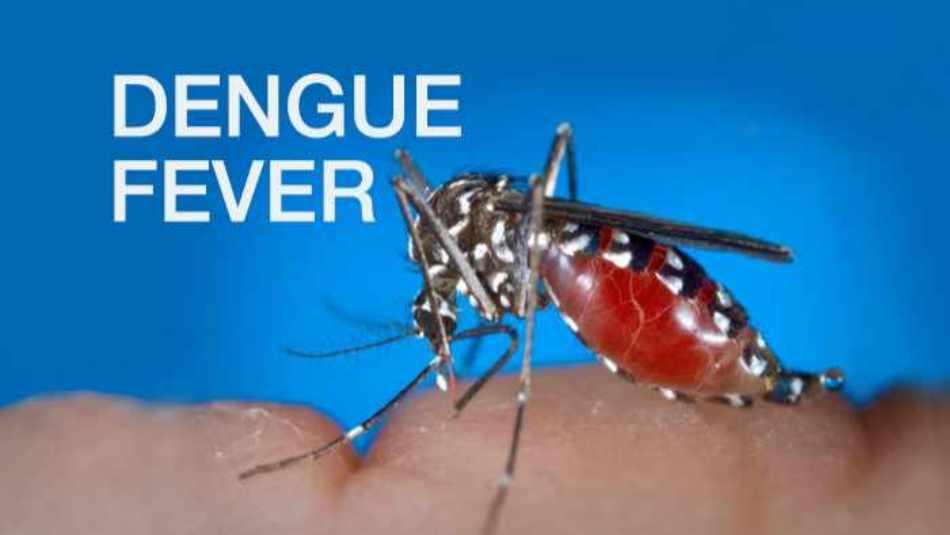 Dengue Fear in Tripura