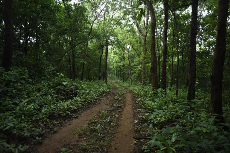 Forester Fakhrul Islam Barbhuiya of Lakhipur Forest Department Transferred