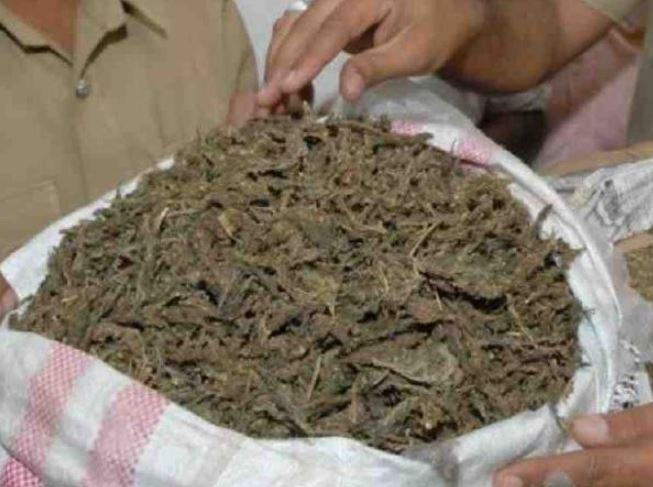 Seized Ganja Smuggled From Police Station!