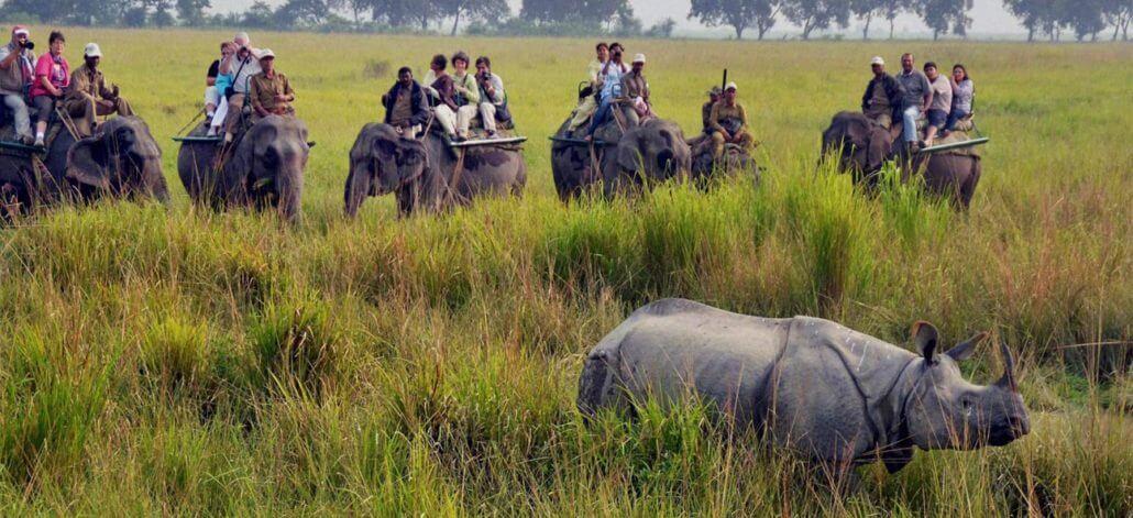 Wildlife NGOs and activists plea to give Kaziranga respite from human pressure