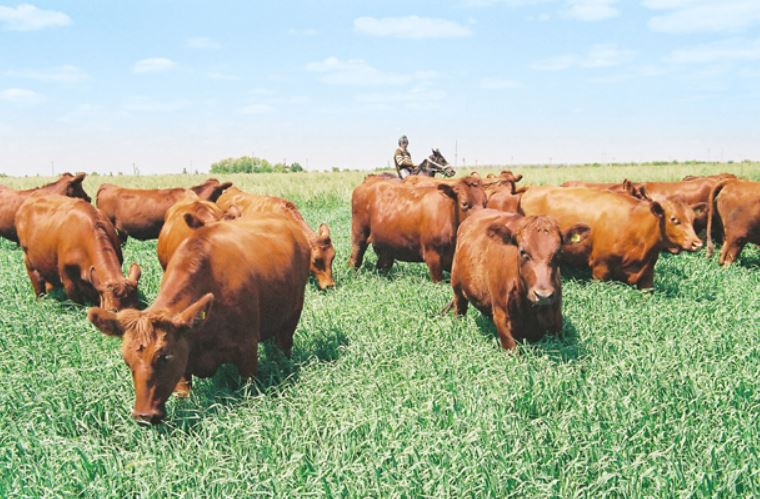Dr Don Kupar Roy suggests measures to rejuvenate livestock farming
