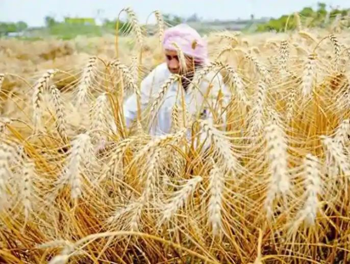 Good response in paddy procurement, government to subsidies milling charge