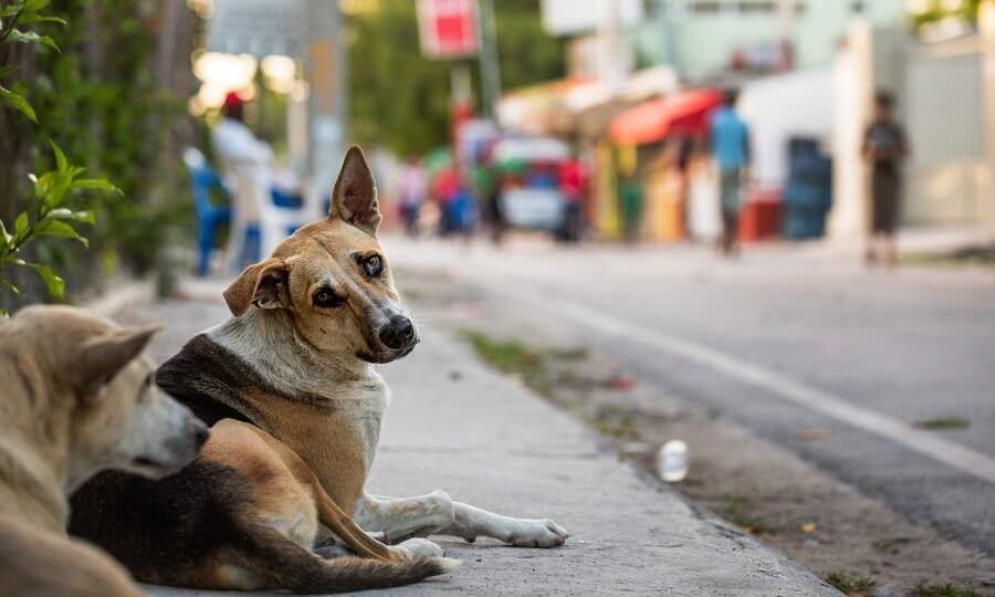 Canine Smugglers The Reason For Street Dogs Dwindling In Tripura