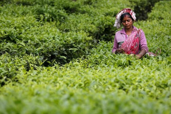 Tea exports down marginally in 2018