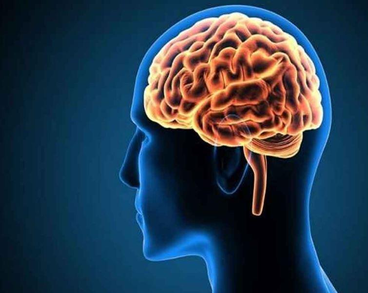 A Brain Circuit To Reverse Liquor Craving