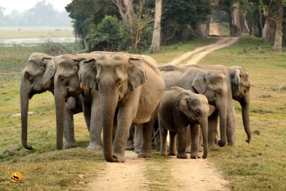 Wildlife Experts Demands Joint Initiative to save Jumbos in Barak Valley