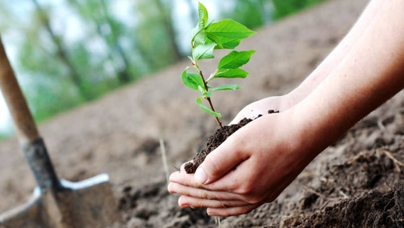 Environmental Policy Foundation Appeal For Plantation Drive