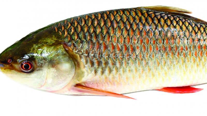 Ban on fish in Mokokchung