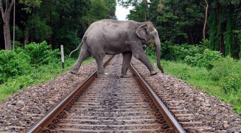 National Green Tribunal Asks Railway Authorities to Free Elephant Corridor