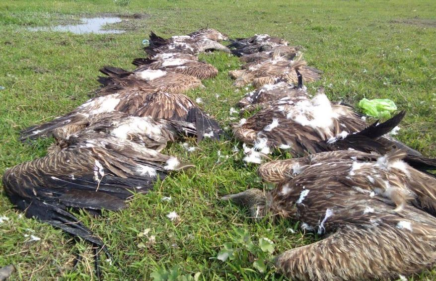 32 vultures found dead in Demow