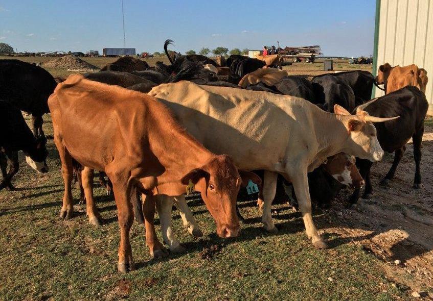 Khasi Jaintia Butcher's Welfare Association (KJBWA) To Set Up Own Market In State