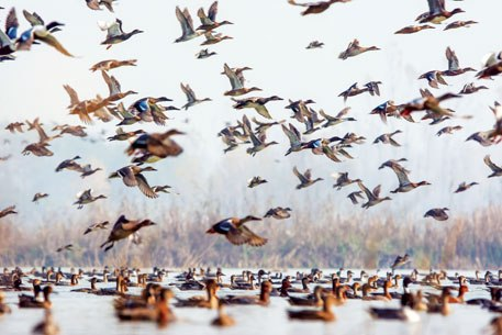Sarala village of North Tripura facing the downside of migratory birds