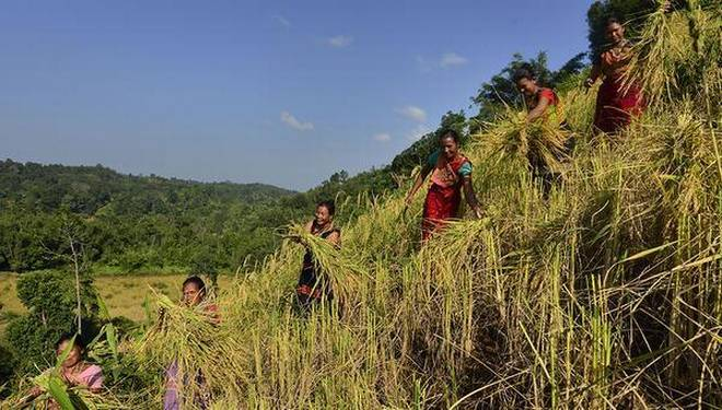 Fani brings laughter to farmers who solely depend on Jhum cultivation