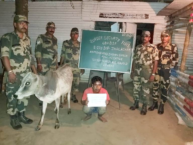 BSF Apprehended Two Indian Cattle Smugglers along with six Cattle heads from Indo-Bangla Border