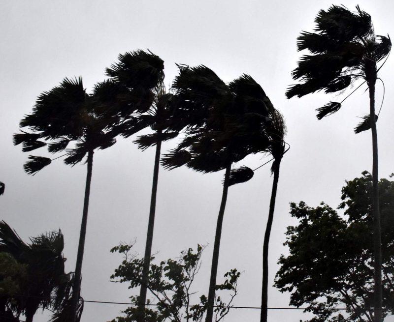 Rain lashes Tripura; houses damaged, trees uprooted