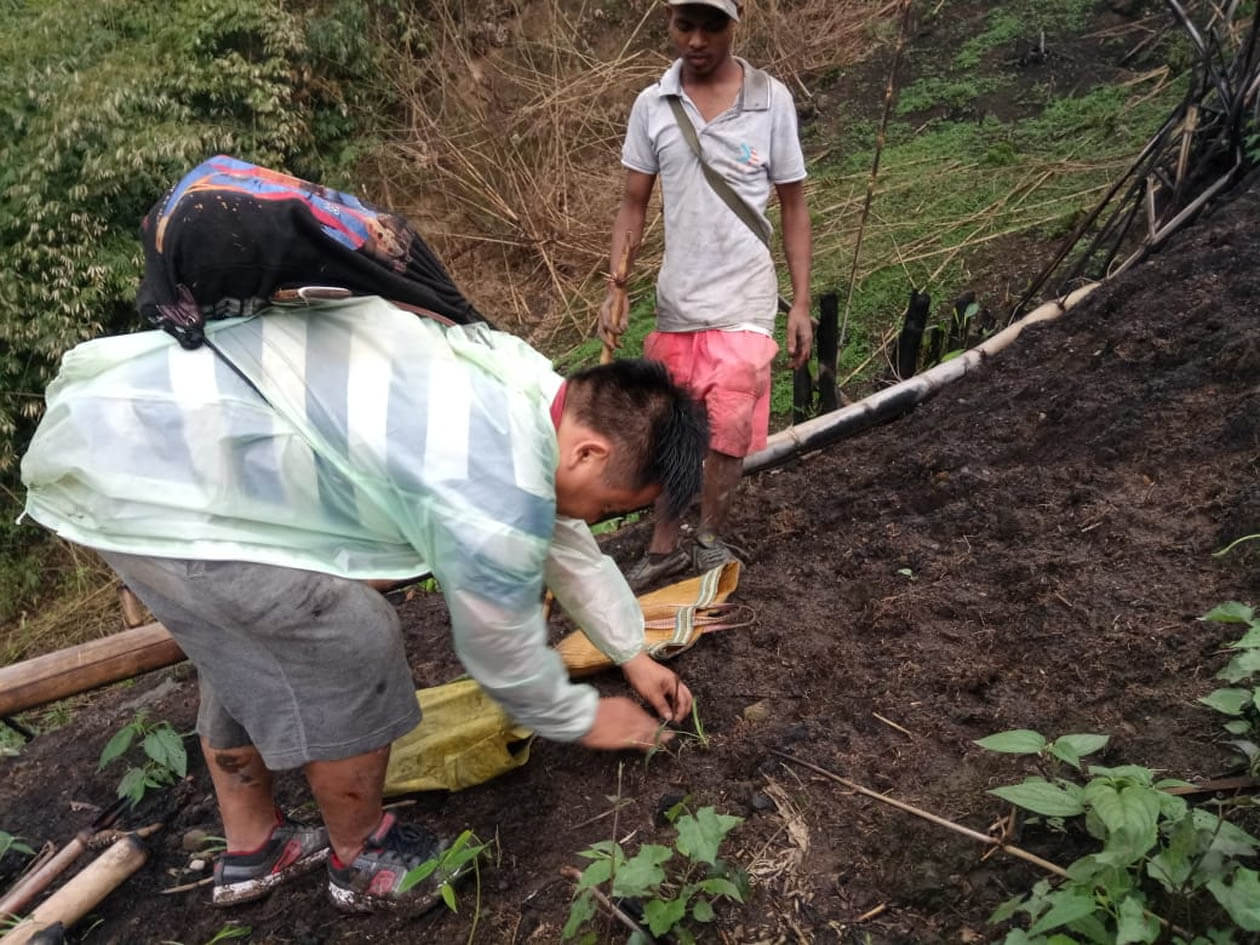 More than 500 teak saplings planted at Kimin, Arunachal Pradesh by Pinchum Area Natural Resources Conservation Committee