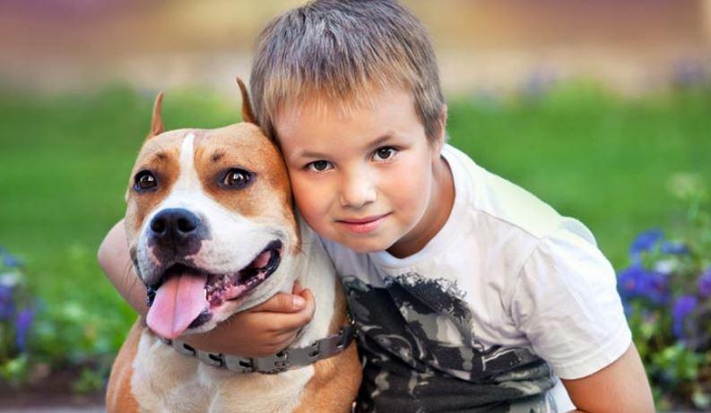 Children Face Highest Biting Risk From Pit Bulls