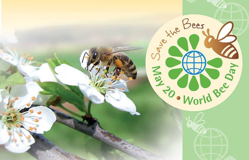 World Bee Day Celebrated At Byrnihat For Creating Awareness On The Buzzing Effects On The Ecosystem