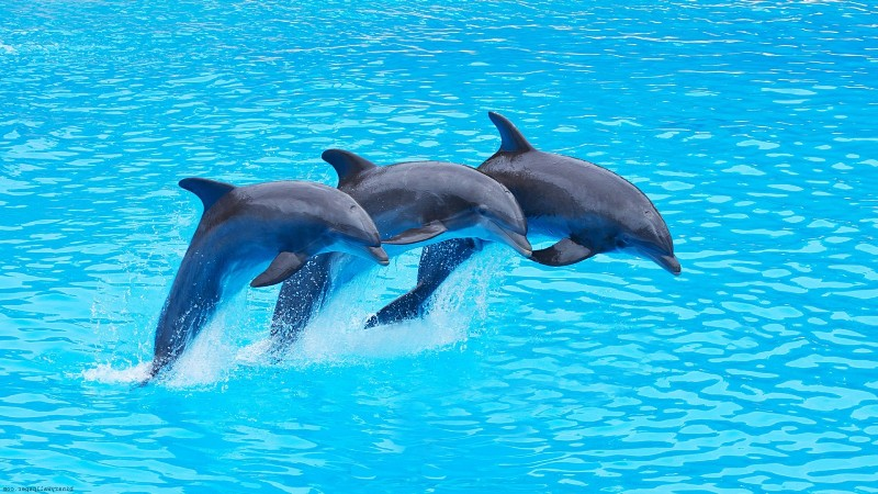 Study Finds Dolphins Form Friendships Through Shared Interests, Just Like Humans