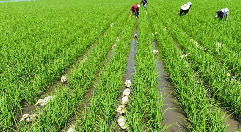 Arunachal Agriculture And Horticulture Minister Tage Taki For Continued Development Of Farming Sector
