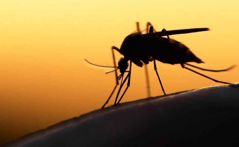 Malaria Spreads In Tripura Hills
