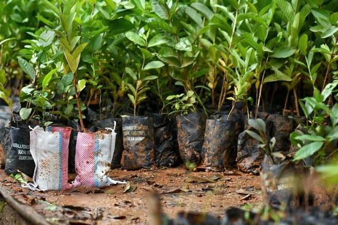 ICAR-CISH to supply 20,000 saplings to Arunachal Pradesh