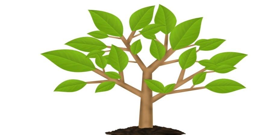 FLO NE celebrates World Environment Day