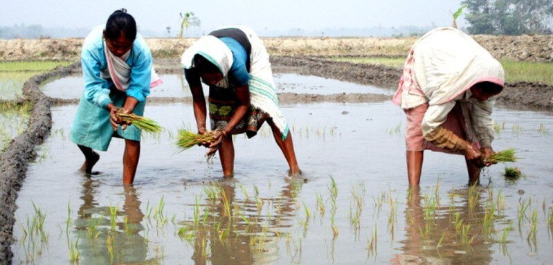 Kharif paddy procurement begins in Sonitpur district