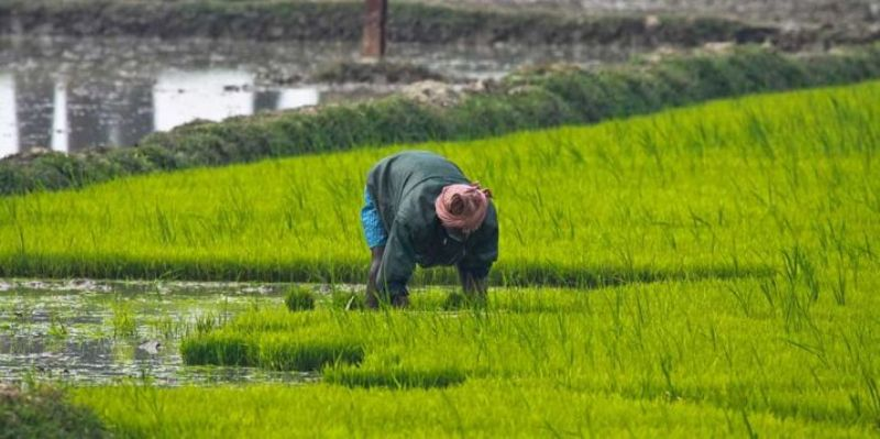 Arunachal Pradesh Gets Post-Harvest Processing & Research Centre