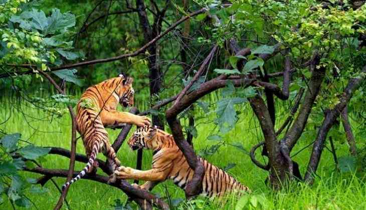 Stop Construction In Tiger Reserves: Supreme Court to Uttarakhand