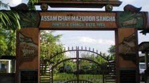 Assam Chah Mazdoor Sangha